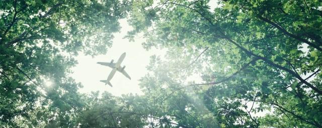 Aircraft visible through trees