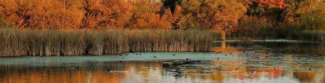 Pond with fall foliage