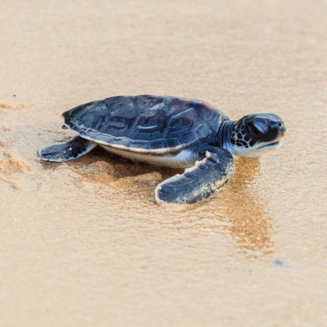 young turtle on beach