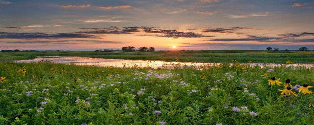 wildflowers in sunset