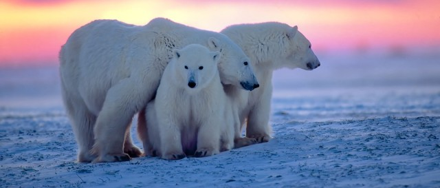 Operation-PolarEye-polar-bears-Northrop-Grumman
